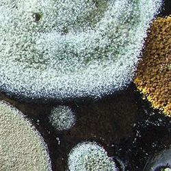 ReliOX kills Molds